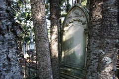 Toowong Cemetery (interestedbystandr) Tags: toowong toowongcemetery cemetery brisbane