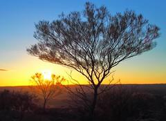 Living Desert Trees at Dusk, Broken Hill, New South Wales, Australia (Red Nomad OZ) Tags: brokenhill sunset tree dusk australia newsouthwales nsw desert outback livingdesert