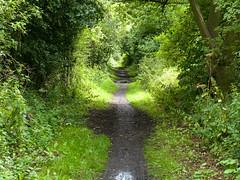 Trans Pennine Trail / Dearne Way (Geoffrey Thompson.) Tags: track conisbrough cycleroute cyclepath transpenninetrail doncaster southyorkshire unitedkingdom gbr westridingofyorkshire england yorkshire railwaytrack railwayfeatures disused byways britishisles greatbritain