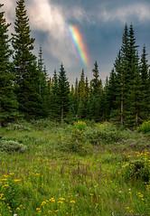 Rainbow's grace (Bill Bowman) Tags: rainbow virga subalpinemeadow engelmannspruce flowers dyc daisies erigeron pedicularisgroenlandica sunset willows cablegatemeadow mountainresearchstation colorado niwotridge