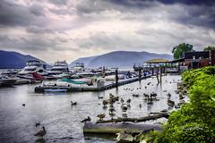 River newburgh- (jsleighton) Tags: boats dock mountains sky hudson river geese ducks newburgh landscape