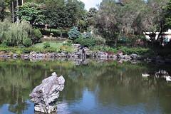 SDIM0124 (LZ775) Tags: sigma 1750mm sd1m 適馬 适马 康樂公園 honglokpark fanling 粉嶺 岭 香港 新界 hongkong newterritories x3 foveon