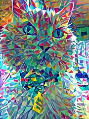 Heavily Processed Norio (sjrankin) Tags: 20july2018 edited animal cat yubari hokkaido japan processed filtered closeup norio bedroom