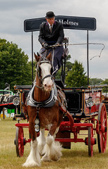 Driffield Show 2018 IMG_9641 (oddlegs) Tags: driffieldshow2018 driffield showground july rural agricultural traditional horsedrawn