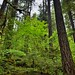 Surrounded by a Forest of Greens (North Cascades National Park Service Complex)