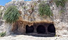 Latomia del Paradiso. Neapolis. Siracusa. (Svetla (ribonka 78)) Tags: europe italy italia sicilia siracusa travel
