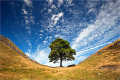 Sycamore Gap (Sandra Lipproß) Tags: sycamoregap northumberland hadrianswall tree landscape sky clouds nature outdoor sandralippross sycamore iconic england uk blue green wall steelrigg peelcrags