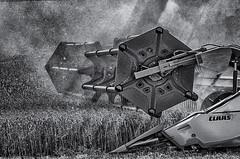 Feeding the monster! (David Feuerhelm) Tags: monochrome blackandwhite bw noiretblanc schwarzundweiss nikkor contrast machine harvester combine combineharvester wheat field crop dust agriculture farming closeup nikon d750 70200mmf28