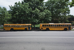 School Busses (adrianmichaelphotography) Tags: streetphotography streetphotographer bus busses schoolbus transportation travel yellow road trees