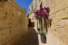 Mdina,  Malta, June 2018 782 (tango-) Tags: malta malte мальта 馬耳他 هاون isola island rabat mdina medina