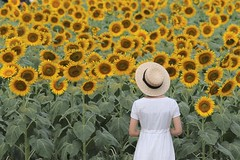 A Girl in Sunflower Field (seiji2012) Tags: 昭和記念公園 立川市 向日葵 少女 ポートレート 夏 tachikawa showakinenpark summer