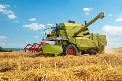 Spring Barley Harvest 2018 in Austria | CLAAS (martin_king.photo) Tags: harvest harvest2018 ernte 2018harvestseason springbarley barley grain austria österreich claas vintage claasmercator75 claasmercator combineharvester combine harvester old oldmachine man summerwork powerfull martin king photo machines strong agricultural greatday great czechrepublic welovefarming agriculturalmachinery farm workday working modernagriculture landwirtschaft martinkingphoto moisson machine machinery field huge big sky agriculture tschechische republik power dynastyphotography lukaskralphotocz day fans work place clouds blue yellow gold golden eos country lens rural camera outdoors outdoor