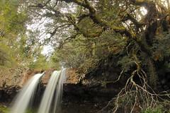 Knyvet Falls (Caleb McElrea) Tags: cradlemountainlakestclairnationalpark cradlemountain unesco worldheritagesite tasmaniansouthwestwilderness tasmania wilderness