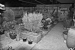 My Garden Monochrome (brianarchie65) Tags: mygarden garden darkness flowers plants shadows pots green lines trough monochrome blackandwhite blackandwhitephotos blackandwhitephoto blackandwhitephotography blackwhite123 blackwhiterealms flickrunofficial flickr flickrcentral flickruk flickrinternational ukflickr unlimitedphotos ngc yorkshirecameraramblers canoneos600d geotagged brianarchie65 fence