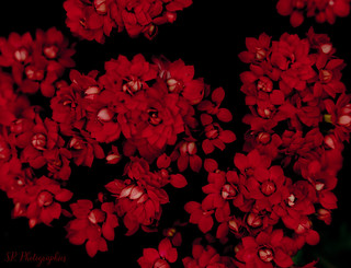 Red flowers~
