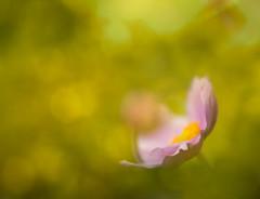 Tierhogar garden (bsjphoto) Tags: