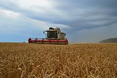 DSC_9003 (anetaležáková) Tags: summer sunset summerharvest sunnydays harvest agriculture agriphoto czechagri caseihpuma case casepuma165 caseoptum casepuma200 claas claaslexion newholland