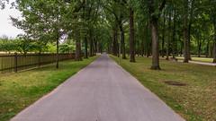 Hofgarten Bayreuth D 3.)1806-3580 (dironzafrancesco) Tags: bäume tamron bayreuthd tamronsp2470mmf28diusd slta99v hofgartenbayreuthd sony lightroomcc bayreuth bayern deutschland de