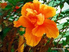 Orange Hibiscus #art (Stephenie DeKouadio) Tags: abstractpainting abstractflower abstract abstractart abstractflowers art artistic flowerspainting flowerpainting flowersabstract flowerabstract macropainting macroabstract colorful orange