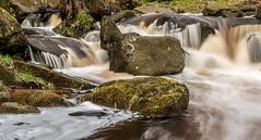 2018-04-03 PG-1390338.jpg (Hands in Focus) Tags: woodland derbyshire moss lumixfz1000 peakdistrict water padleygorge burbagebrook
