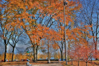 Fall Colors in Chicago