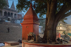 Still of the Morning Light (shapeshift) Tags: colorsofindia colorfulindia nikon d5600 shapeshift shapeshiftnet morninglight temple tree shrine riverfront waterfront stairs steps ghats ghatsofvaranasi assighat kashi benares banaras varanasi uttarpradesh india in storyofindia cityscape templescape davidpham davidphamsf documentary storiesofindia indiastories thirdworld thethirdworld 3rdworld the3rdworld