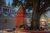 Still of the Morning Light at Assi Ghat Varanasi (shapeshift) Tags: nikon d5600 shapeshift shapeshiftnet morninglight temple tree shrine riverfront waterfront stairs steps ghats ghatsofvaranasi assighat kashi benares banaras varanasi uttarpradesh india in