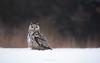 Western Siberian Eagle Owl - Vasil (ciwi.photography) Tags: bird vogel birdofprey forest beautiful animal tier tierfotografie animalphotography snow winter geifvogel greifvögelfotografie nikon d750 westernsibirianeagleowl bubobubosibiricus bubosibiricus
