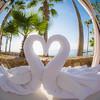 Impossible to Refuse (Thomas Hawk) Tags: cabo cabosanlucas hiltonloscabos hotel loscabos loscaboshilton mexico heart swan swans fav10