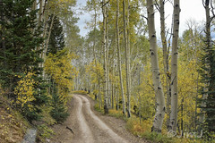 What's Ahead? (Jim Johnston (OKC)) Tags: lastdollarroad goldenaspens sanjuanmountains colorado 4wheeling narrow