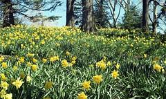 Brooklyn Botanic Garden (triebensee) Tags: leica m3 kodakcolorplus200 selfdeveloped tetenal c41 film epsonv700 leitz summicron 50mm f2 bbg brooklynbotanic