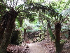 A Walk In The Rainforest (AdamsWife) Tags: australia tasmania russellfalls mtfieldnationalpark nationalpark plants path ferns fern landscape