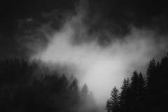 cap watershed...april mist (c.turzak...) Tags: watershed vancouver bc canada capilano