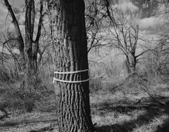 No Future Here (2018) (IntimateMuse) Tags: cottonwoods chatfieldstatepark colorado forest bw monochrome