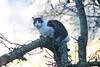 IMG_0529 (d_fust) Tags: fust cat katze tier haustier kätzchen animal кот gato katt 貓 kissa γάτα 猫 kedi macska แมว gatto बिल्ली gatito γατάκι yavrusu 小貓 kitten का बच्चा anak kucing gattino 仔猫 고양이