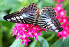Having a Taste (dianne_stankiewicz) Tags: insect nectar wildlife wings pattern vibrant