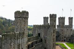 Caernarfon Castle (adamrferry) Tags: caernarfon caernarfoncastle castle uk wales northwales flag architecture grass england greatbritian britain greatbritain oldcastle oldbuilding