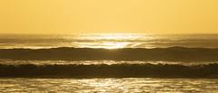 20180502_9318_7D2-200 Golden sea (johnstewartnz) Tags: canon7dmarkii canonapsc canoneos7dmkii 70200 70200mm 7d 7dmarkii 7d2 apsc canon eos