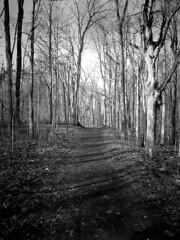 The Path 2 (Jeffery Womack) Tags: novi 2018earylyspring smartphonephotography monochrome forestpathway nature water samsunggalaxy8plus blackandwhite dramaticmonochrome hikingtrails trees mayburystatepark michigan northville unitedstates us