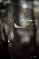 It Extended Its Webbed Appendage... (SpencerTheCookePhotography) Tags: web tree nature outdoors canon dof depthoffield spooky creepy creature bokeh