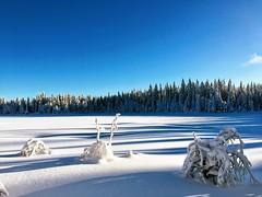 Snow on a clear day. (daghoi) Tags: nordmarka oslo ski snø snow sky blue madshus langrenn vinter winter nature landscape