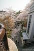 Otonashi Water Park (takashi_matsumura) Tags: oji tokyo sakura cherry blossoms nikon d5300 otonashi water park kitaku japan ngc afp dx nikkor 1020mm f4556g vr