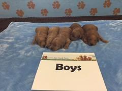 Dakota Boys 4-8