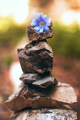 Equilibrium (Sabrina-Romano) Tags: flower stone macro close uo 35mm nikond90 colours equilibrium balance meditation reflection nature photography naturalistic natural reflexion