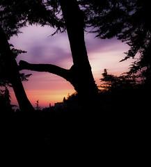 sunset tree silhouette (freemanphoto) Tags: sunset tree silhouette bergamo cittàalta italia italy lombardia magenta red orange goldenhour spring primavera alberi trees albero longexposure esposizionelunga sky skyporn cloud cloudporn cloudy warm shadow ombra