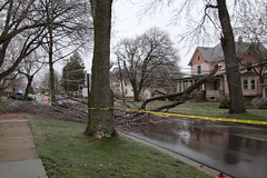 Downed Tree on Henry Street During an Ice Storm (Saline, Michigan - April 15, 2018) (cseeman) Tags: saline michigan ice icestorm henrystreet henrystreetsaline salineice04152018 limb tree fallen fallentree fallenlimb springtime