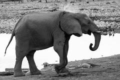 IMG_3242-2 (tregnier) Tags: namibia roadtrip africa travel desert animals sossusvlei leopard cheetah lion solitaire trip