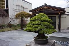 Courtyard in winter, National Bonsai and Penjing Museum (jmlwinder) Tags: courtyard inwinter nationalbonsaiandpenjingmuseum usnationalarboretum usna washingtondc