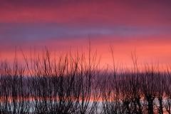Romantic sunset (Dax Borghi) Tags: ngc silhouettes colori colours colour sigma 750d eos canon romantico rosa cielo tramonto romanticism romantic pink blue purple sky sunset albero 1770mm crepuscolo twilight natura nature
