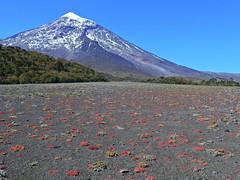 Volcán Lanín (Mono Andes) Tags: andes chile chilecentral argentina pasopaimún volcán volcano volcanoe parquenacionallanín volcánlanín parquenacionalvillarrica